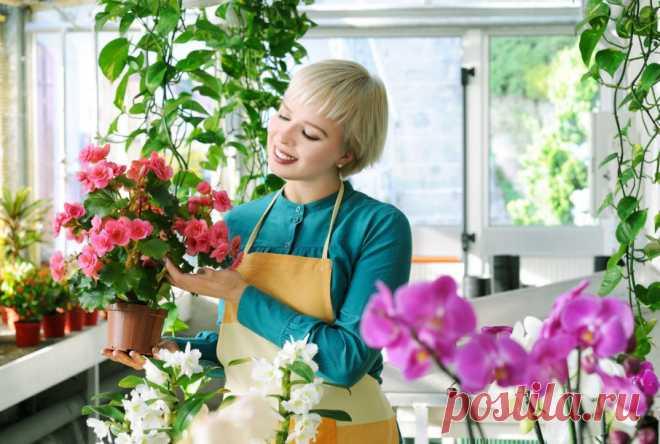 Как победить болезни комнатных цветов - простые хитрости » Женский Мир