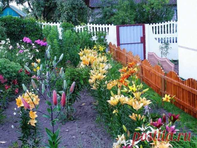 10 советов по уходу за лилиями — Садоводка