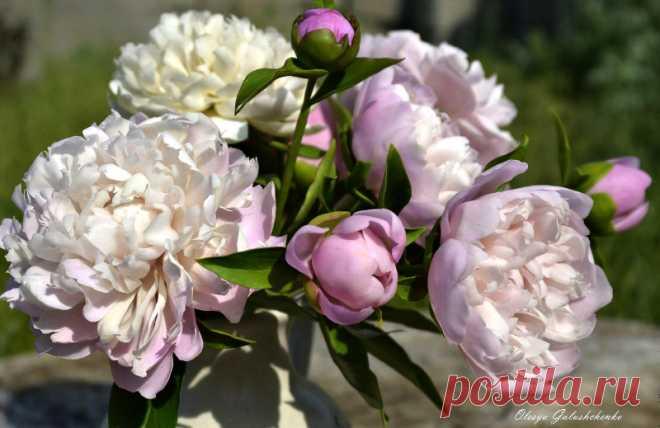 Фарфоровые букеты Олеси Галущенко — словно живые цветы