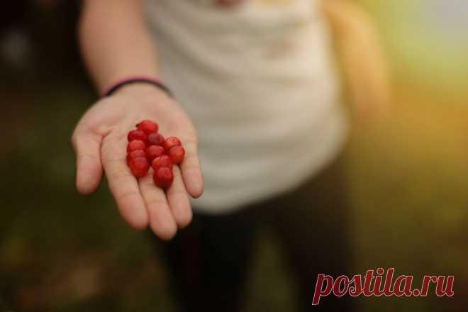 500px / украденных фруктов сладкий вкус Mindprint