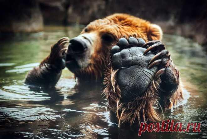 Ridiculous and amusing animals (22 photos)