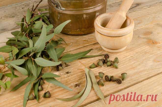 7 растений, спасающих от кашля | Цветочная семья | Яндекс Дзен