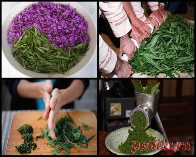 Завариваем Иван чай в домашних условиях: полезные свойства