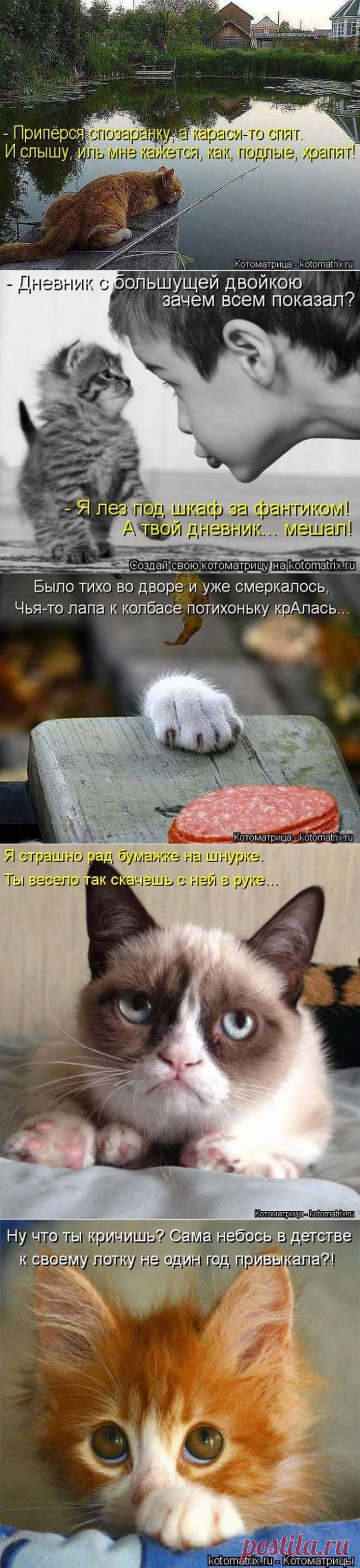 Лучшие котоматрицы недели | ТурПрикол