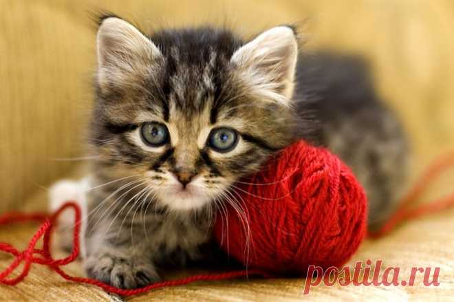 Wool-eating in Cats | Pets4Homes