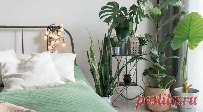 10 классных интерьеров-джунглей для любителей комнатных растений   ИДЕИ ВАШЕГО ДОМА   Яндекс Дзен
