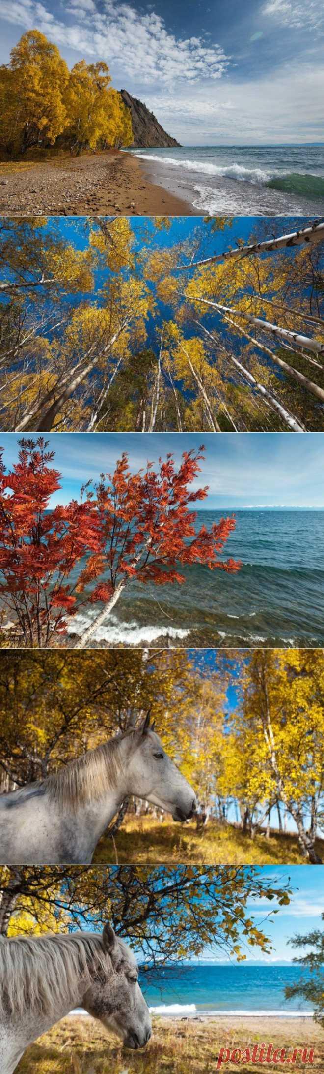 » Золотая осень на Байкале Это интересно!