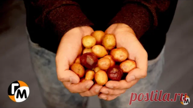 картошку не чистить, на сковороду и.. (секретный деревенский рецепт ). — Кулинарная книга
