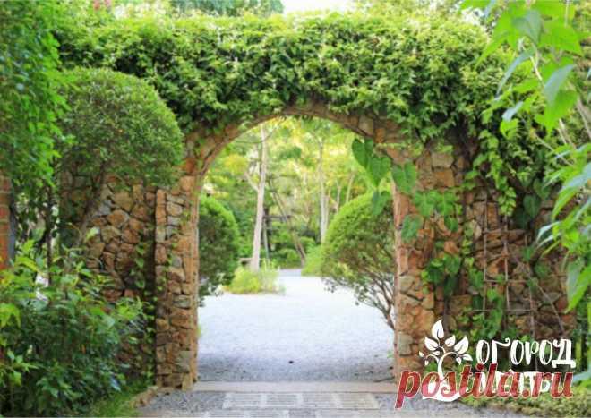Садовые арки: виды конструкций и подборка лучших вьющихся растений | Огород Мечты | Яндекс Дзен