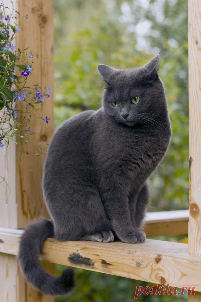 CyBeRGaTa - Cats, Memes, New Mexico - Антонина Автор Chesnova Anna