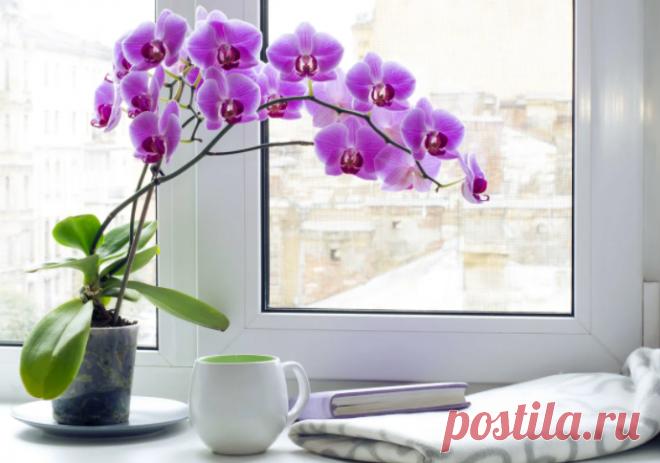 Корни орхидеи высовываются из горшка: как привести в порядок растение | Аgro-Мarket24 – помощник садовода | Яндекс Дзен