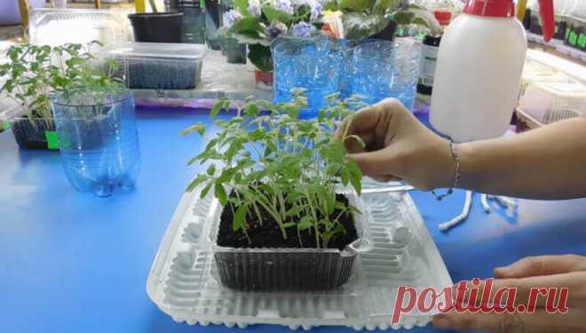 фитильное выращивание рассады
