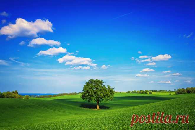 Tree, the field, the plain, green, the sky, lonely, day, summer wall-paper for windows desktop