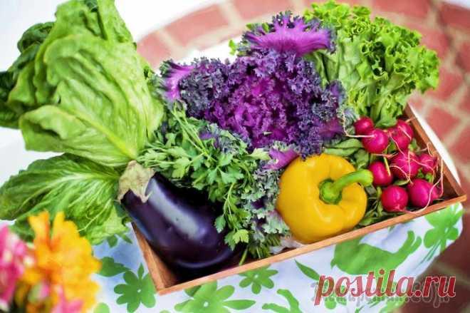 Как правильно хранить овощи и зелень Сколько, где и как хранить овощи в квартире зависит от того, в какой температуре, уровне влажности и освещённости нуждается какой-либо конкретный вид. Так, например, капусту и морковку нужно хранить в...