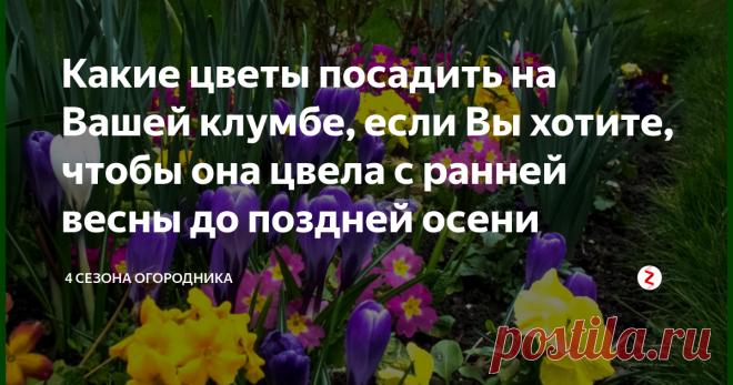 Какие цветы посадить на Вашей клумбе, если Вы хотите ...