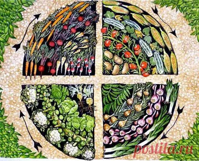 Севооборот овощных культур на грядке: что и как? | 6 соток