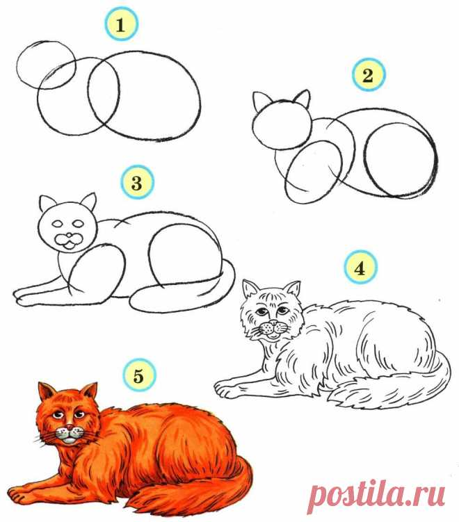 «Учимся рисовать животных» — карточка пользователя slavashishaev в Яндекс.Коллекциях