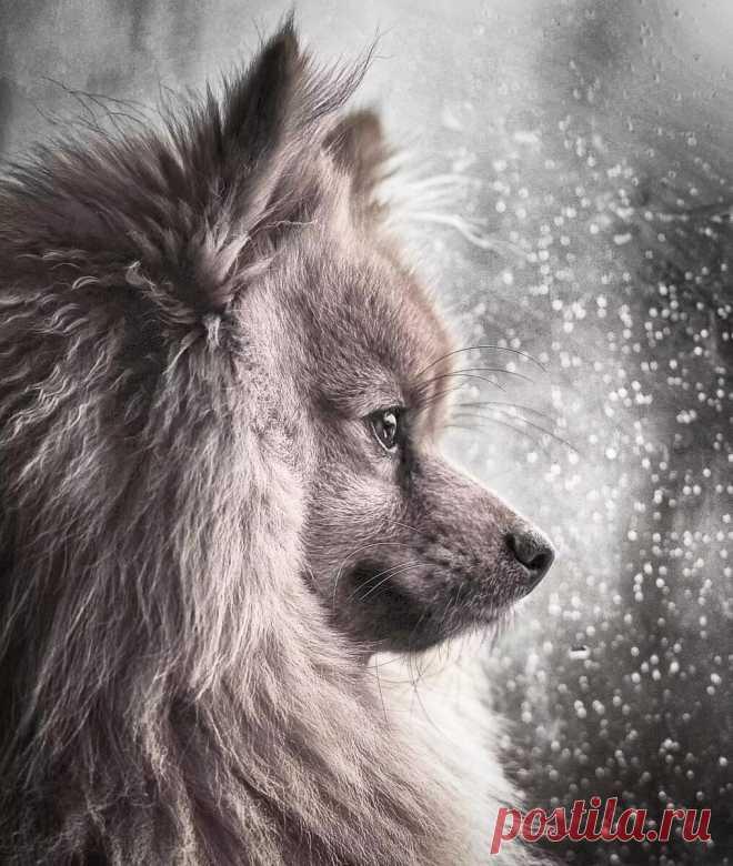 Ретроспектива: 30 фотографий от призеров конкурса «Dog photographer of the year 2018» | Кинолог Александр Смирнов | Яндекс Дзен