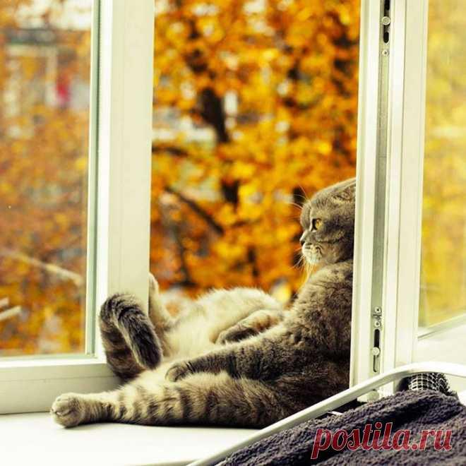 Смешные картинки настроение осень, прости