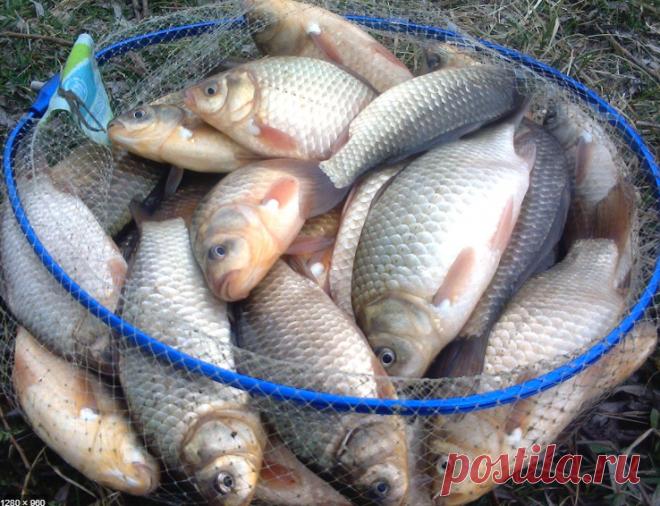 Как подготовить червей к рыбалке, чтобы клев был, как из пулемета