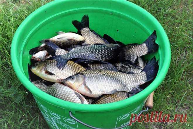 Как приготовить для рыбалки хмельную насадку, на которую отлично ловятся карась, карп и плотва