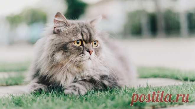 «На сложных щах»: топ пород кошек с плохой репутацией - Питомцы Mail.ru