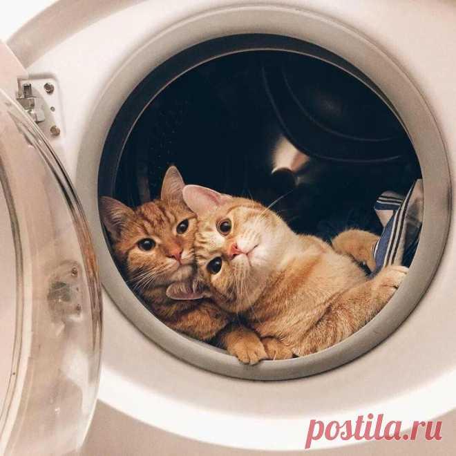 19 сентиментальных примеров настоящей, искренней дружбы между животными