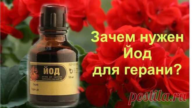 Подкормка из йода для буйного цветения герани: инструкция | 6 соток