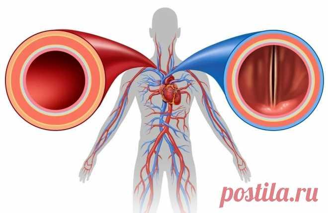 Молодость — это не зубы, пресс, менструация или эрекция. Молодость — это состояние артерий!