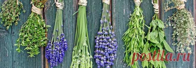 Прованские травы — состав, вкус, польза. Букет гарни | avefrance.com Прованские травы, Herbes de Provence - уникальная композиция пряностей. Благодаря своим кулинарным и другим свойствам, она прославилась на весь мир.