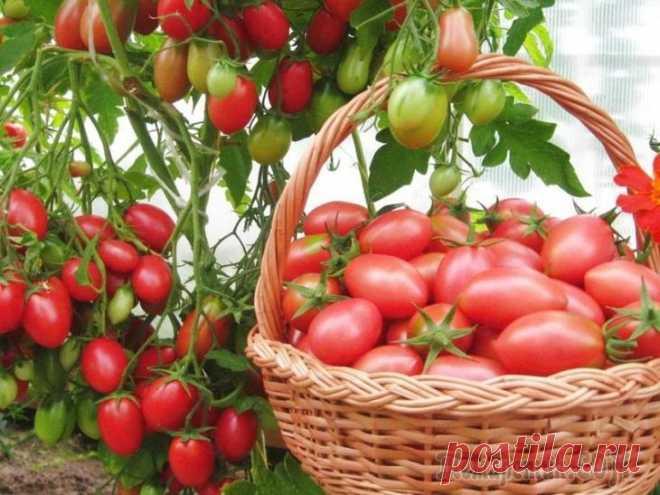 Народные средства для подкормки помидоров – самые лучшие рецепты Томаты можно подкармливать не только готовыми удобрениями на основе химических веществ. Также отлично зарекомендовали себя натуральные подкормки, благодаря которым растения дают хороший урожай. Внесен...