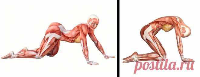 10 упражнений на растяжку, которые подарят вам гибкость кошки за 4 недели - Советы и Рецепты Пластичность мышц гораздо сильнее влияет нанаше самочувствие, чем мыдумаем.Экспертысчитают, что развитая гибкость помогает достичь лучших результатов натренировках, повышает подвижность икоординацию мышц, уменьшает мышечные боли ипредотвращает травмы. Она такжеулучшаеткровообращение иможет уберечь отнекоторых серьезных заболеваний, таких как артрит, диабет иболезни поче...