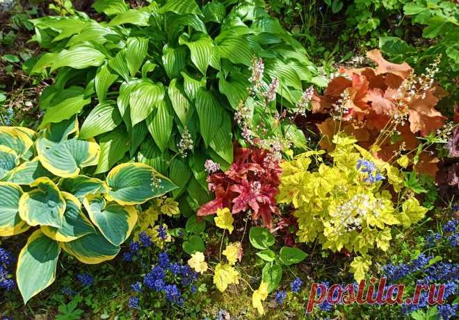 Как создать красивую малоуходную клумбу даже в затенении и без постоянной прополки сорняков | GardenLife | Яндекс Дзен