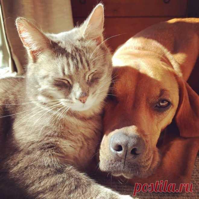 Лучшие друзья с детства