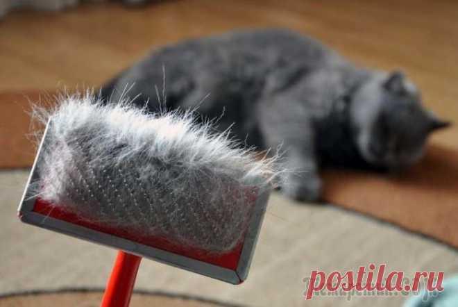 Как очистить мебель, ковры, постельное белье и одежду от шерсти домашних животных
