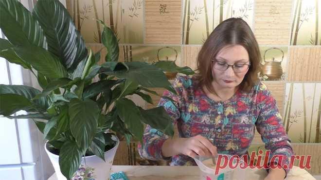 Бесплатная подкормка 2 раза в год обеспечит бешеный рост комнатных растений - Домашние Советы