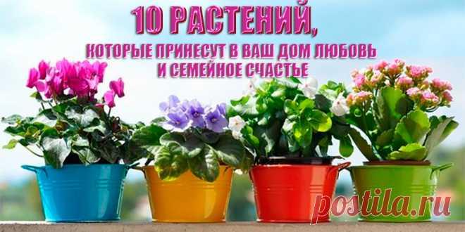 10 растений, которые принесут в ваш дом любовь   Полезные советы