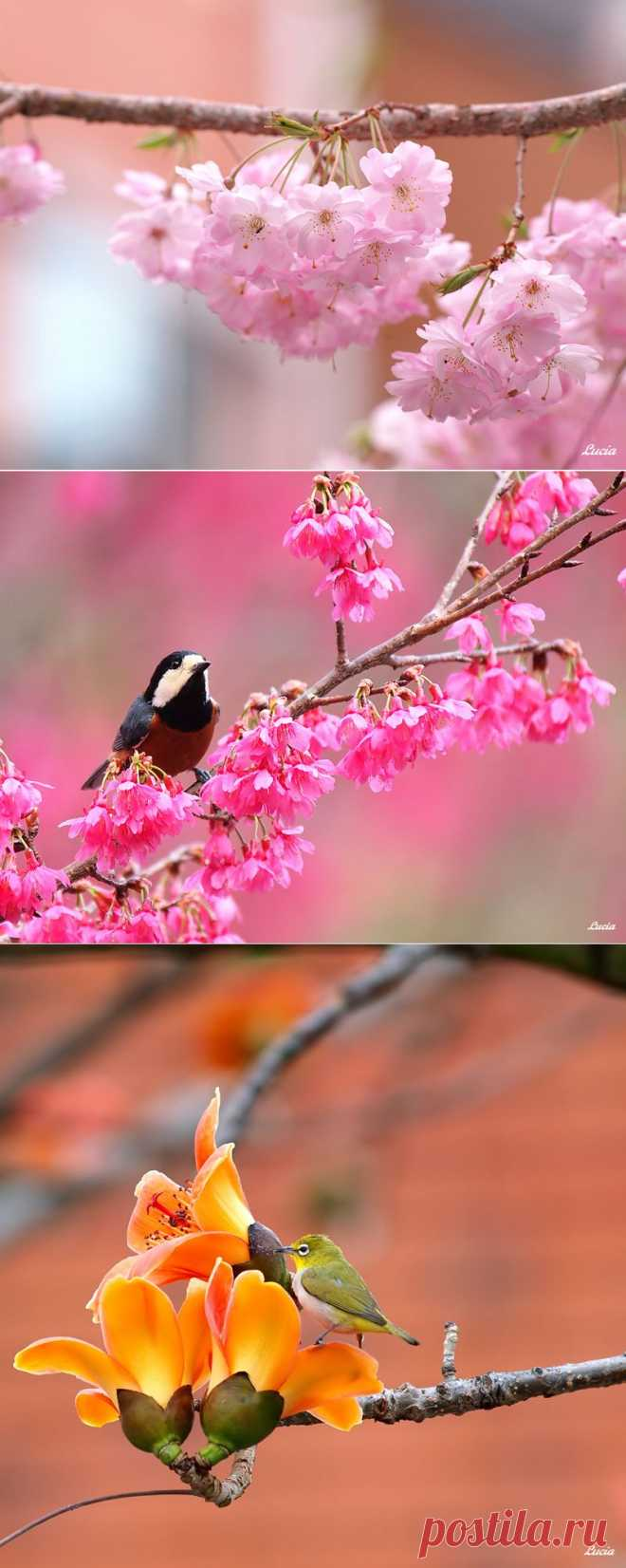 птицы и цветы от Lucia Lin (Тайвань)