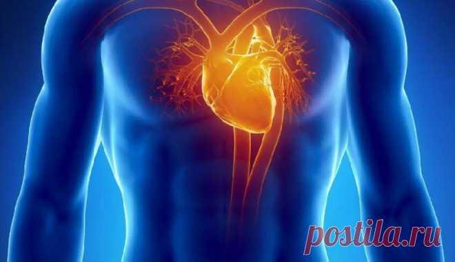 Эффективные методы по укреплению сердечно-сосудистой системы