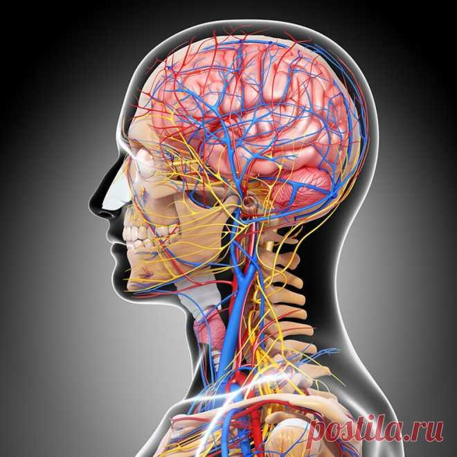 Как навсегда избавится от гипертонии? Упражнения доктора Шишонина   Всегда в форме!