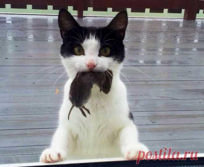 Может подаpки котика и не самые нарядные, зато от всей души
