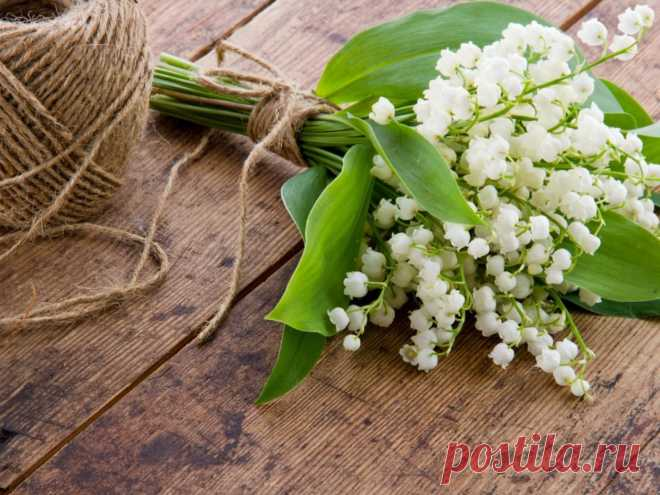 Sign Lily of the valley: the description and the characteristic on a flower horoscope