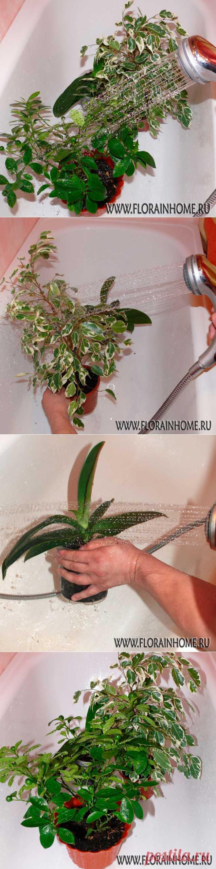 Горячий душ ... для растений | Самоцветик
