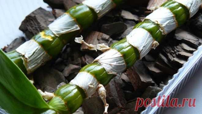 Дендробиум нобиле размножение орхидеи черенками. Результат всего через месяц!