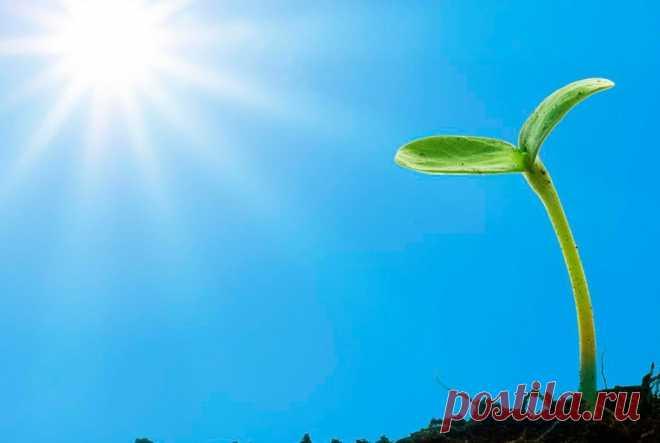 Сроки посева семян на рассаду: моя шпаргалка. Время прорастания разных культур, температура, оптимальный возраст | В саду у Валентинки | Яндекс Дзен