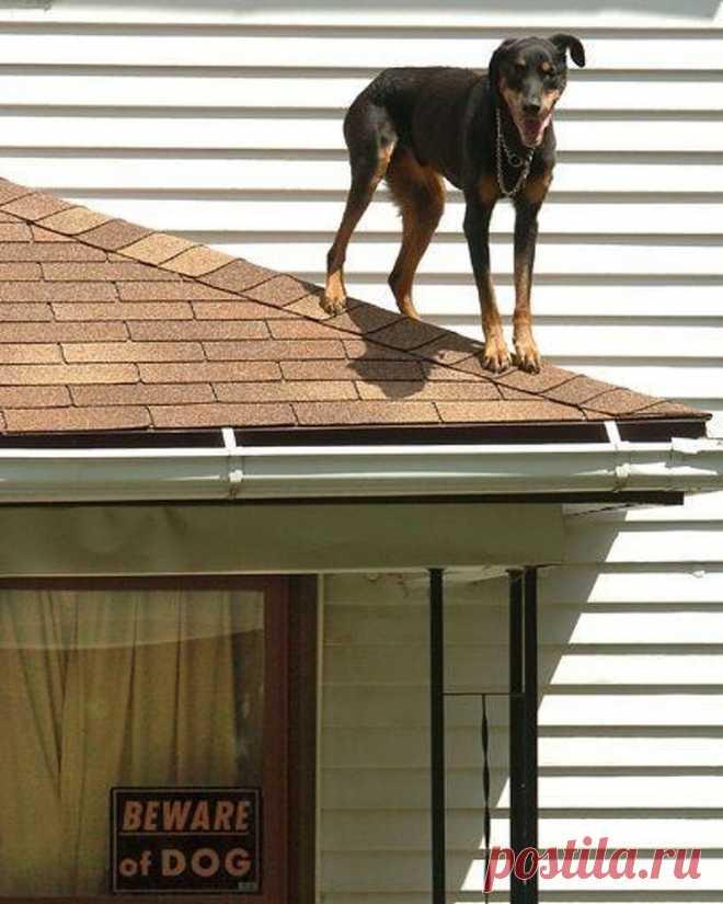 18 собак, которых поставили охранять двор, а как это делать — не объяснили. Поэтому они берут обаянием