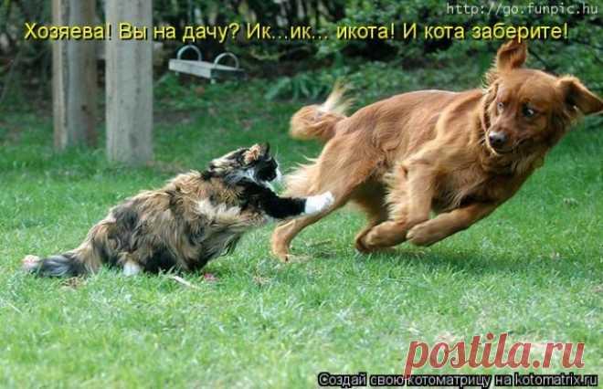 Take away a cat!