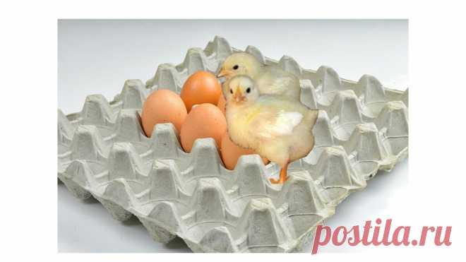 Вред яичных лотков