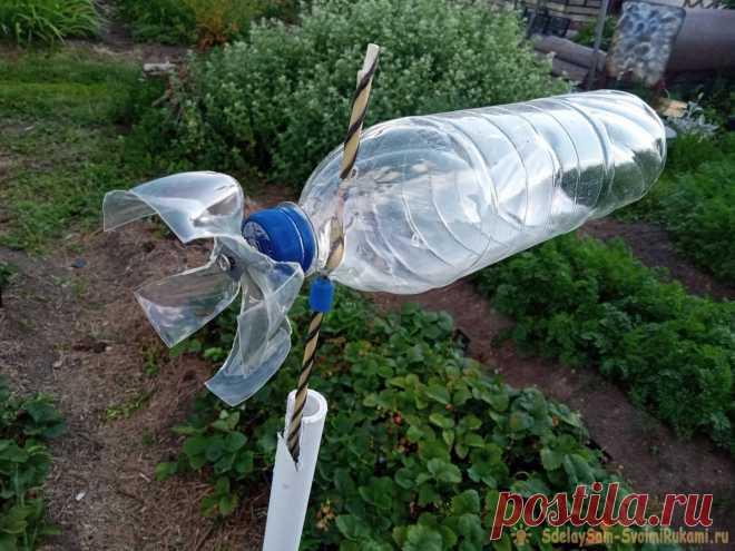 Такая вертушка из бутылки моментально распугает всех птиц на вашем участке Лето – это сезон ягод и фруктов, но весь урожай может пропасть из-за надоедливых птиц, далее я расскажу, как сделать простую самоделку, чтобы избавиться от летучих вредителей. Также своей вибрацией по стержню отлично отпугивает и кротов в земле где установлена.Нам понадобится:Пластиковая бутылка
