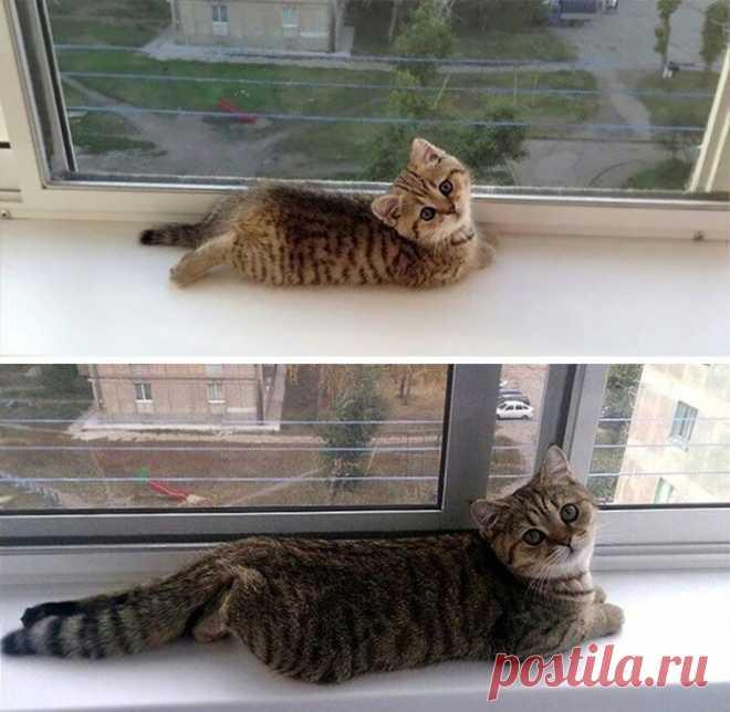 Котик вырос, а привычка осталась)))